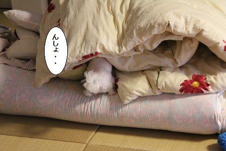 IMG_4751_1おし1