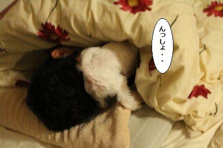 IMG_5167_1 うっし1