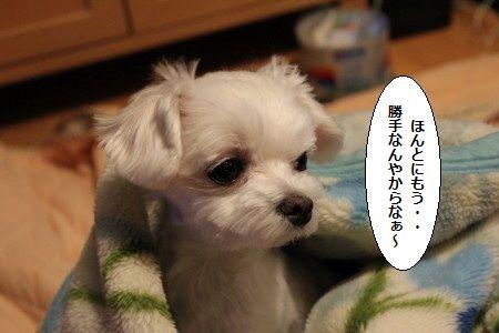 IMG_4829_1 とう1