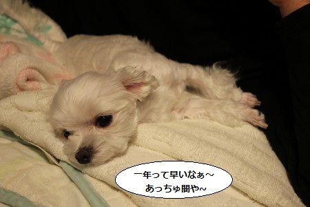 IMG_5362_1こと1