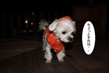 IMG_5494_1 うん1