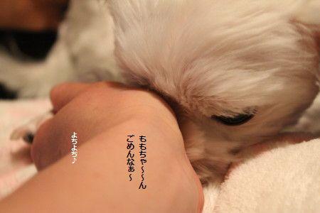 IMG_5408_1よちよち1