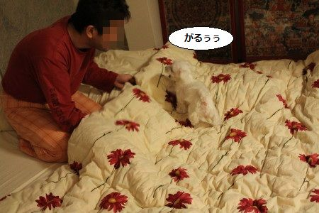 IMG_6336_1 うう1