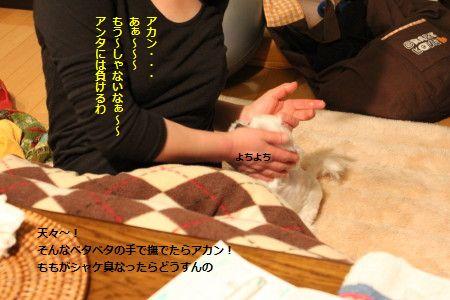 IMG_6380_1べた