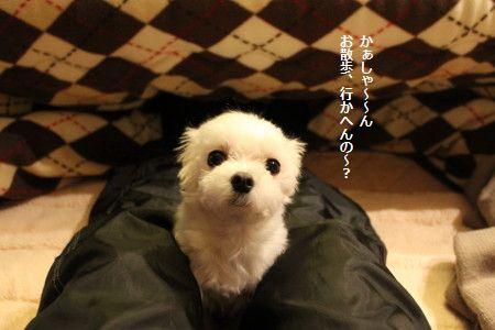 IMG_6407_1 さんぽ