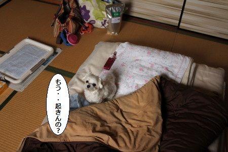IMG_6572_1 おき1