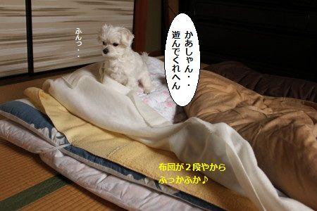 IMG_6579_1しゃし1