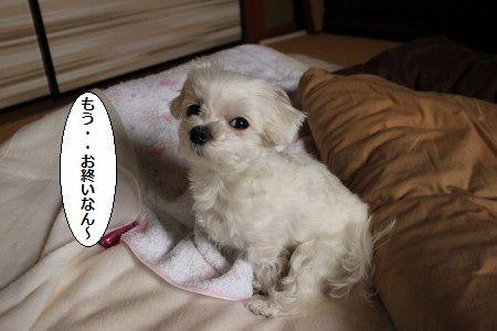 IMG_6598_1おわ1