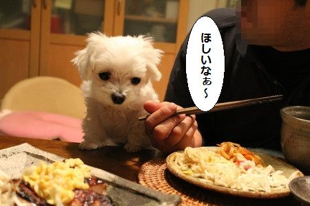 IMG_7072_1ほしい1