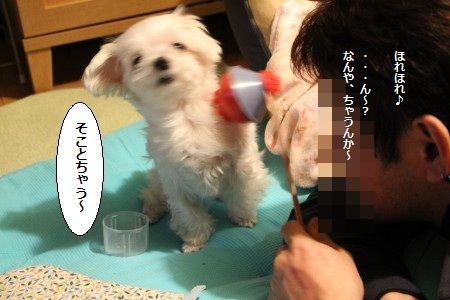 IMG_7027_1とう1