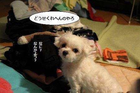 IMG_7217_1かあ1