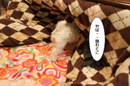 IMG_7281_1やば1