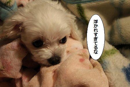 IMG_7249_1 うかれ1