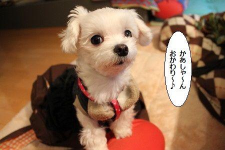 IMG_7515_1おか1