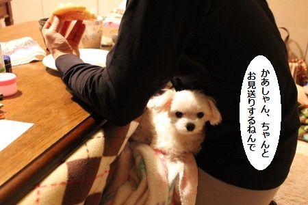 IMG_7704_1ちゃんと2