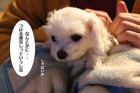 IMG_7828_1どう2