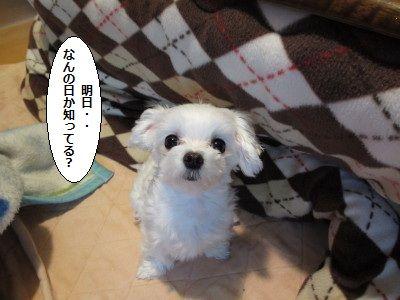 IMG_0103_1かあ1
