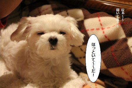IMG_8061_1ほる1