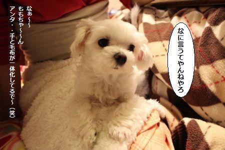 IMG_8069_1すき1