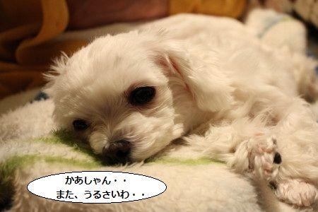 IMG_8288_1なに~2