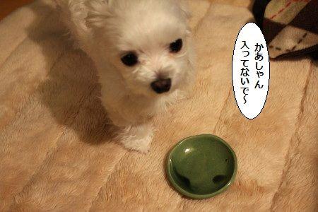 IMG_8366_1おかり1