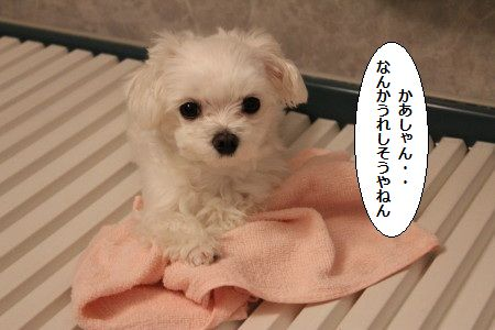 IMG_8376_1ねる1