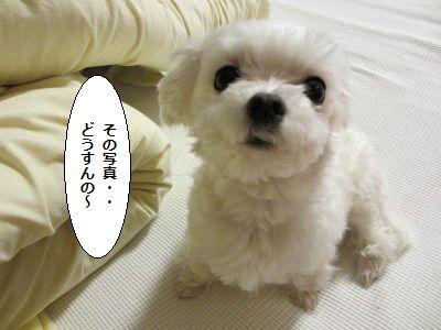 IMG_0323_1どう1