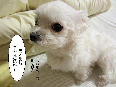 IMG_0324_1 そん2