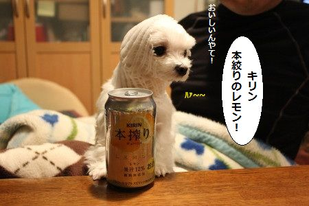 IMG_8557_1ええ1