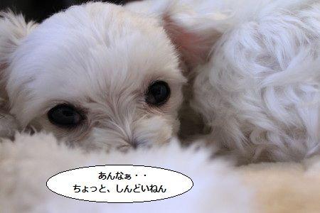 IMG_8793_1あんな~1