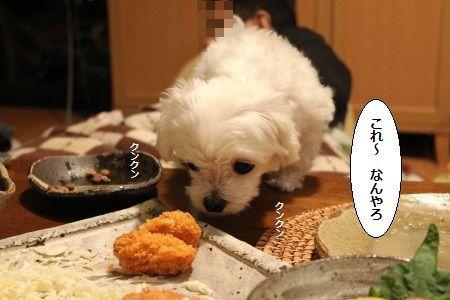 IMG_9609_1おいち2