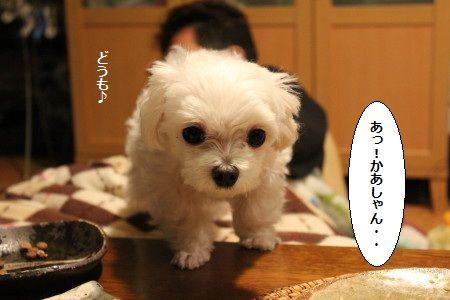 IMG_9613_1あっkk1