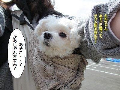 IMG_0558_1どっこ1