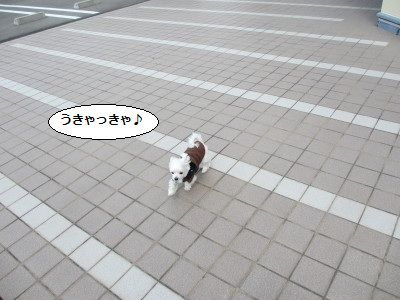 IMG_0575_1きゃ~~1