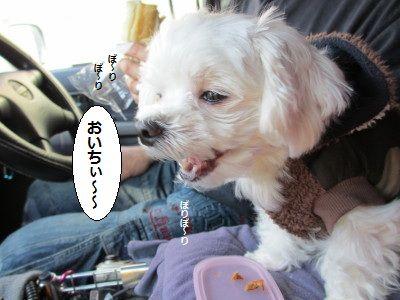 IMG_0593_1おいちい1