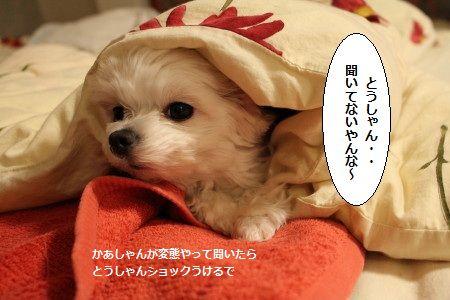IMG_9988_1とうきく1