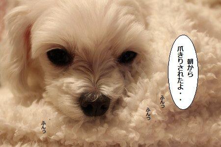 IMG_9868_1あさから1