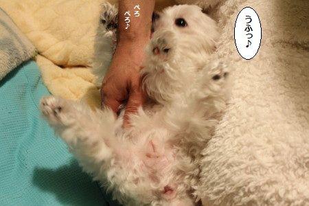 IMG_0684_1ふっぎゃ1