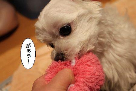 IMG_0840_1があう!1