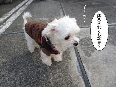 IMG_0167_1koko1.jpg