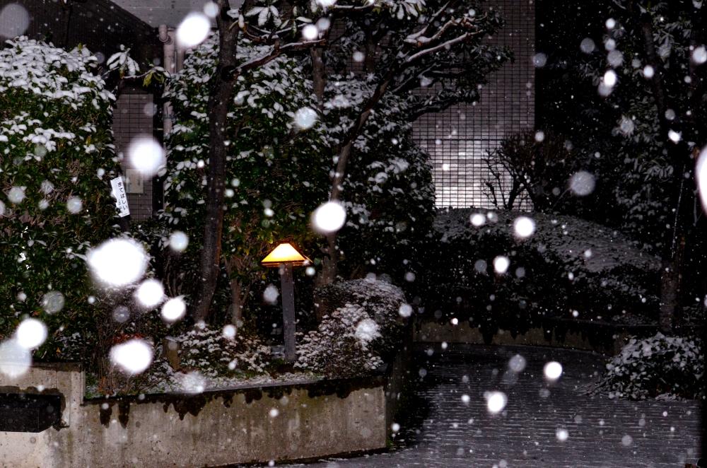 _20140207雪_01