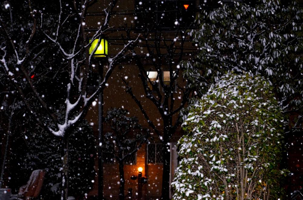 _20140207雪_02