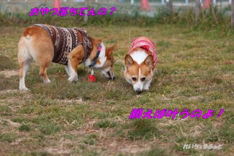 IMG_9852.jpg