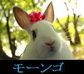 ウサギアイコン