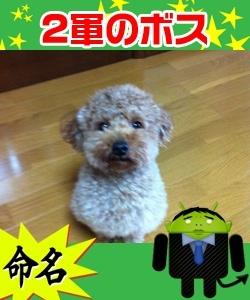 iphone_20120219213031.jpg