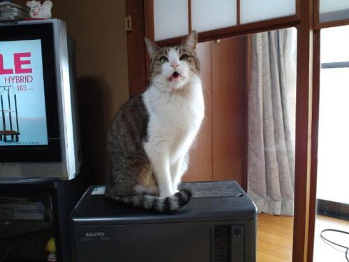 猫ヒーター