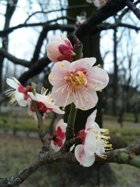 2012,2,25梅ヶ丘