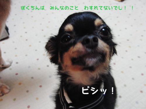 CIMG9369.jpg