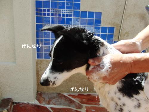 CIMG9615-1.jpg