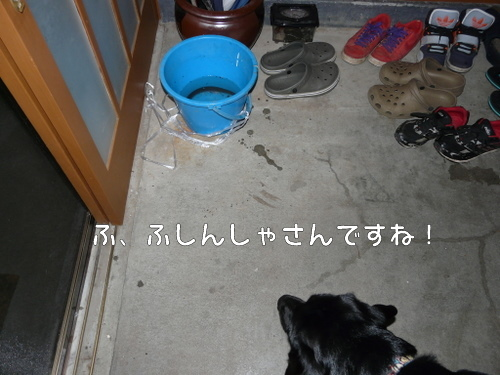 P1500315-1.jpg